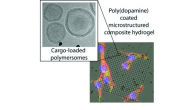 MPCL has contributed to research on Surface-Adhered Composite Poly(Vinyl Alcohol) Physical Hydrogels focusing on the Polymersome-Aided Delivery of Therapeutic Small Molecules. The results have been published in Advanced Healthcare Materials.