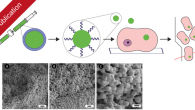 """Our newest publication indroduces liposomal templating for the fabrication of poly(vinyl alcohol) hydrogel particles and their investigation for drug delivery applications. The article entitled """"Liposomal Templating, Association with Mammalian Cells, […]"""