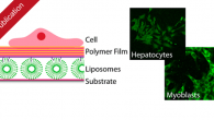 "Researchers from MPCL have contributed to a publication in ACS Applied Materials & Interfaces entitled ""Liposomes as Drug Deposits in Multilayered Polymer Films""."