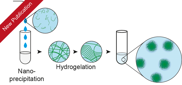 Poly Vinyl Alcohol Physical Hydrogel Nanoparticles Not