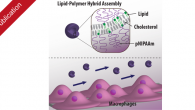 Our most recent publication on Phospholipid—polymer amphiphile hybrid assemblies and their interaction with macrophages has been published in Biomicrofluidics. The paper is a collaboration with the Städler group at Aarhus […]