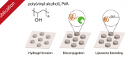 New publication in the Journal of Physical Chemistry B with the title: Poly(vinyl alcohol) Physical Hydrogels: Matrix-Mediated Drug Delivery Using Spontaneously Eroding Substrate Poly(vinyl alcohol) hydrogels have a long and […]