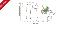New publication in ACS Macro Letters with the title Albumin–Polymer–Drug Conjugates: Long Circulating, High Payload Drug Delivery Vehicles Albumin is an exquisite tool of nature used in biomedicine to achieve […]