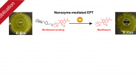 "Our work ""Identification and directed development of non‐organic catalysts with apparent pan‐enzymatic mimicry into nanozymes for efficient prodrug conversion"" has just been published in Angewandte Chemie International Edition. Nanozymes, nanoparticles […]"