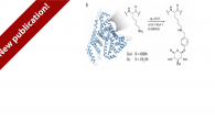 """Our novel work in protein modification """"Per-glycosylation of the Surface-Accessible Lysines: One-Pot Aqueous Route to Stabilized Proteins with Native Activity"""" has been published in ChemBioChem. Chemical glycosylation of proteins is […]"""
